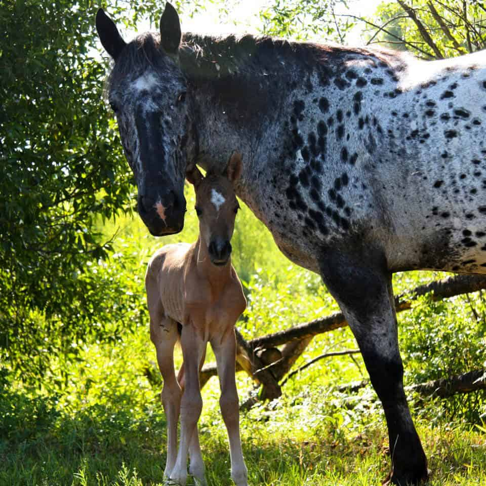 The new Teton Valley colt is getting special mom time